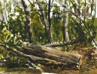 Watercolor of trees in the woods
