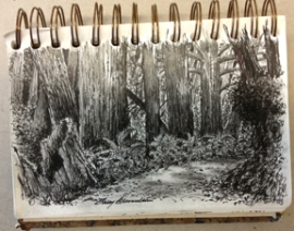 Pen and ink sketch of redwood trees