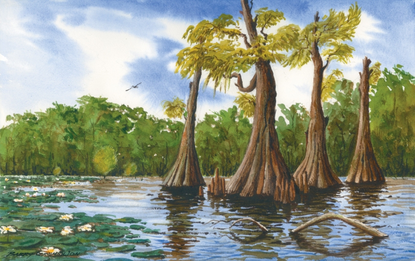 Watercolor of Cypress trees