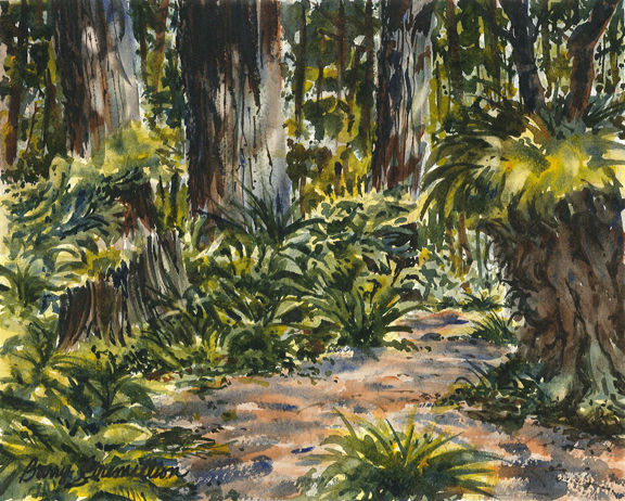 Watercolor of Redwood trees